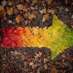 orlando-fall-special