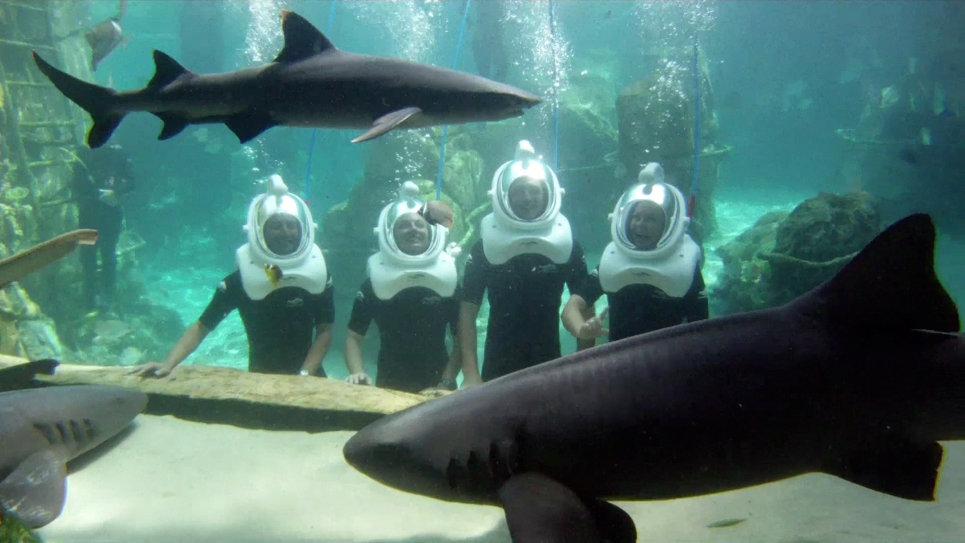 discovery cove celebrates sweet sixteen