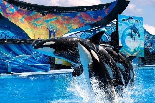 Buy Theme Park Tickets