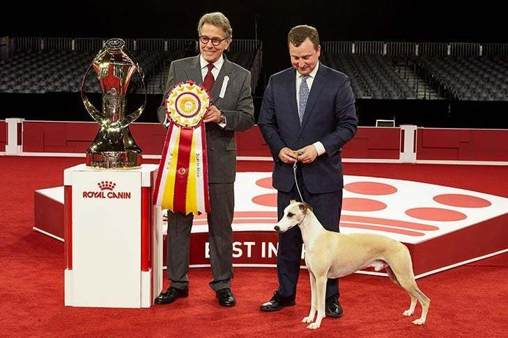 AMERICAN KENNEL CLUB DOG SHOW, ORLANDO, FLORIDA