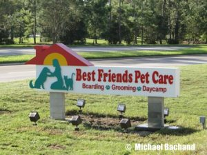 Image of Disney's Best Friends dog care
