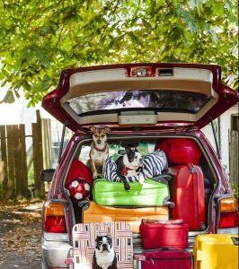 Image of dog in packed car