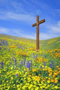 Image of cross in field of flowers